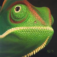 Kameleon: € 225,- Acryl op doek. B x H = 65 x 65 cm