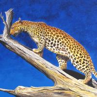 luipaard op boomtak: VERKOCHT. Acryl op plaat. B x H = 126 x 65cm